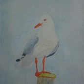 Seagull. Watercolour by Jan David Lindgren